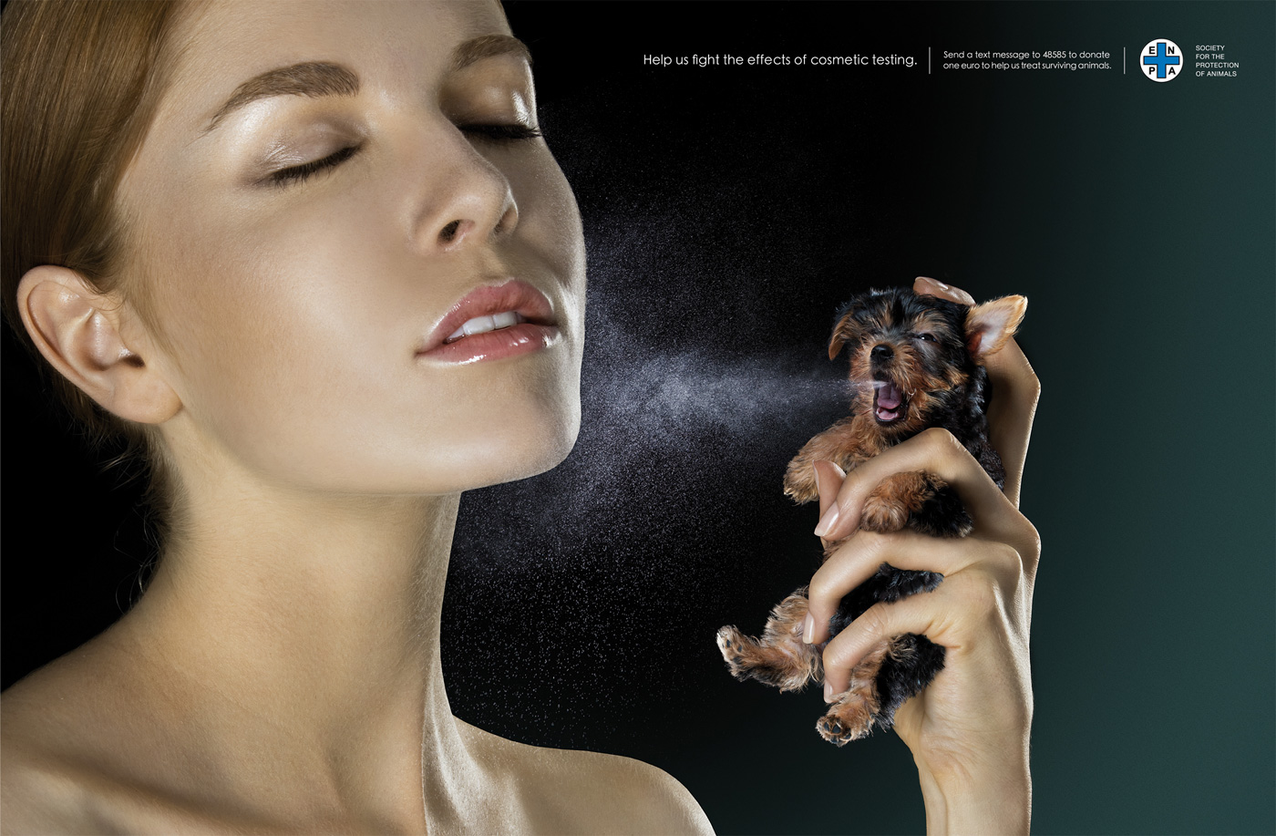 animal testing the blackest of all Animal cruelty - animal testing: information about cruelty in the animal testing industry animal testing: primate research animal tests are conducted all over the.
