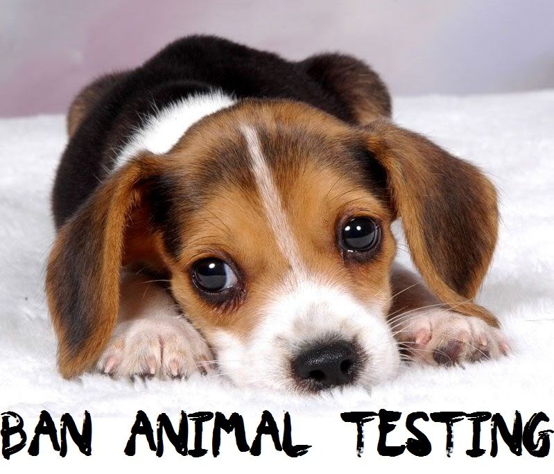 animal testing thesis statement against